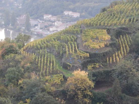 A vineyard in Condrieu
