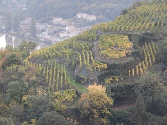 A vineyard in Condrieu